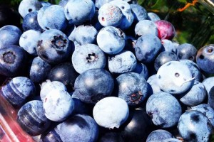 florida-blueberries-846x564
