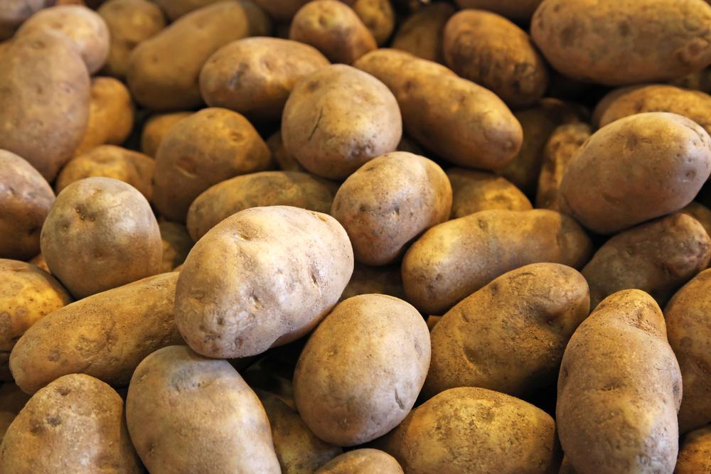 Potato Workshop