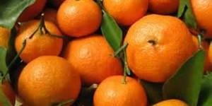 citrus association